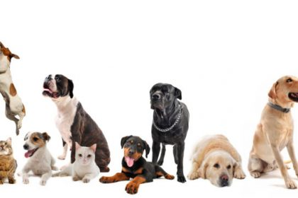 Online classes animal portraits